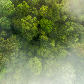 350_regenwald-sumatra-c-Neil-Ever-Osborne-wwf-us
